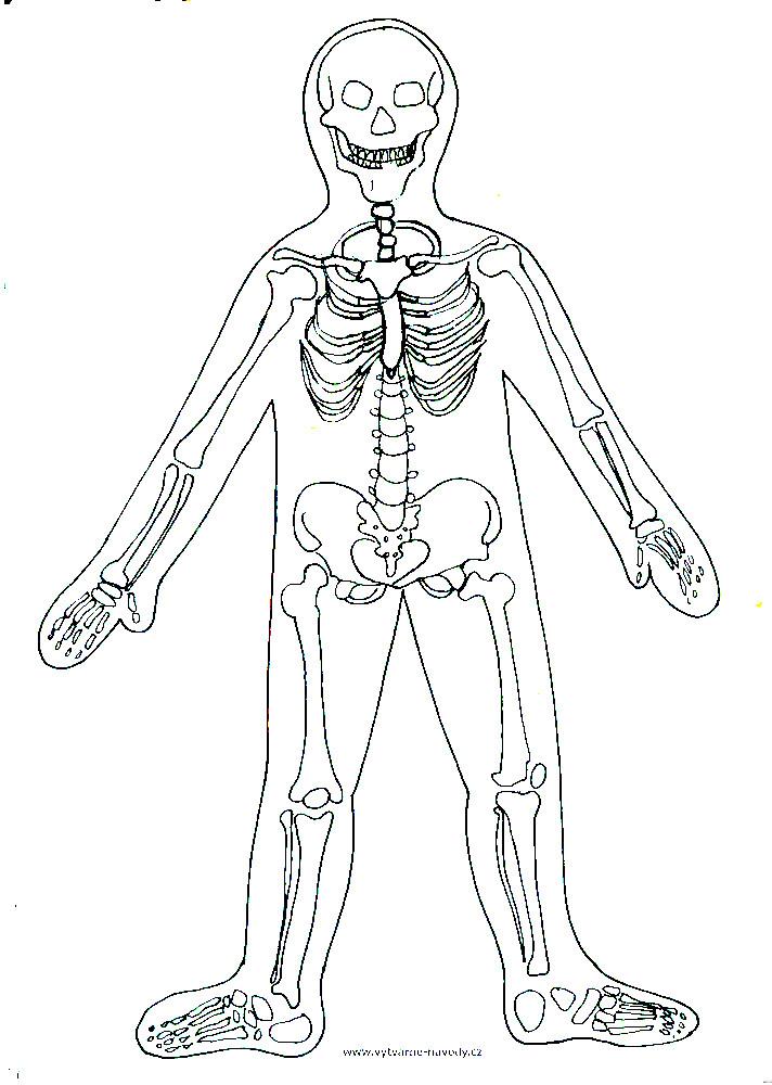 Lidske Telo Vytvarka Pro1 I 2 Stupen Vytvarne Navody A Postupy